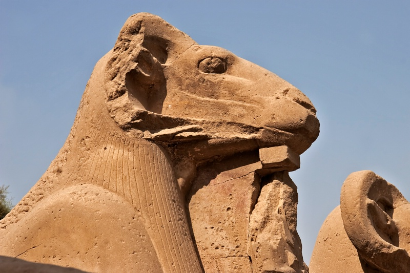 Rams Head Sphinx Luxor Egypt