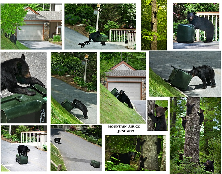 bear activity at Mnt Air