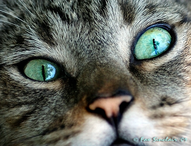 Tropical Eyes 2