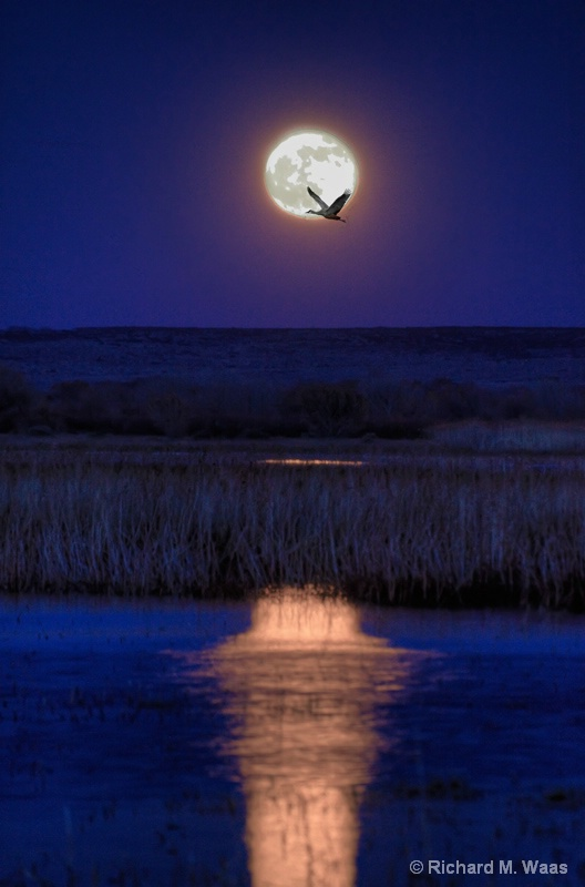 Full Moon Over Bosque del Apache