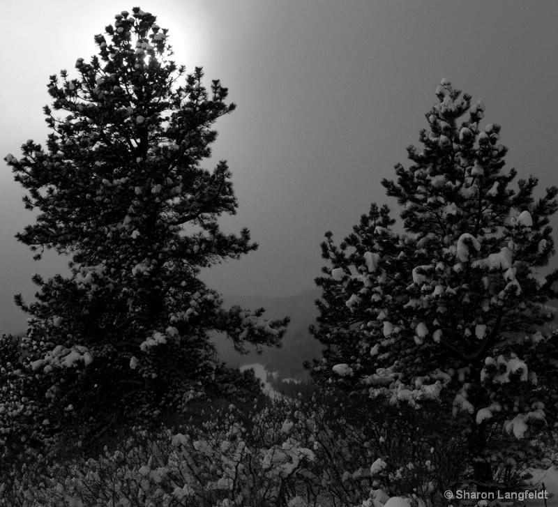 Winter Back Light