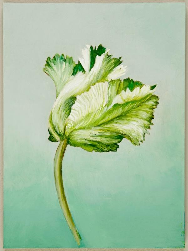 Rembrandt Tulip 4
