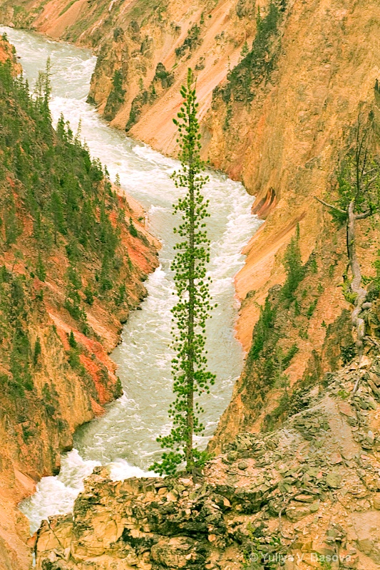 The Grand Canyon of Yellowstone<p>