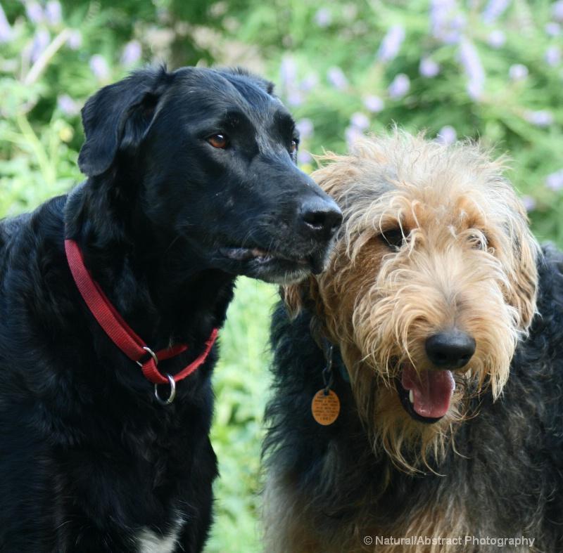 Oscar and Benji