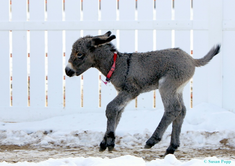 Happiness is...being a donkey