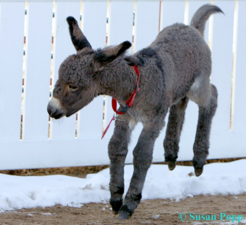 Happy Donkey Dance
