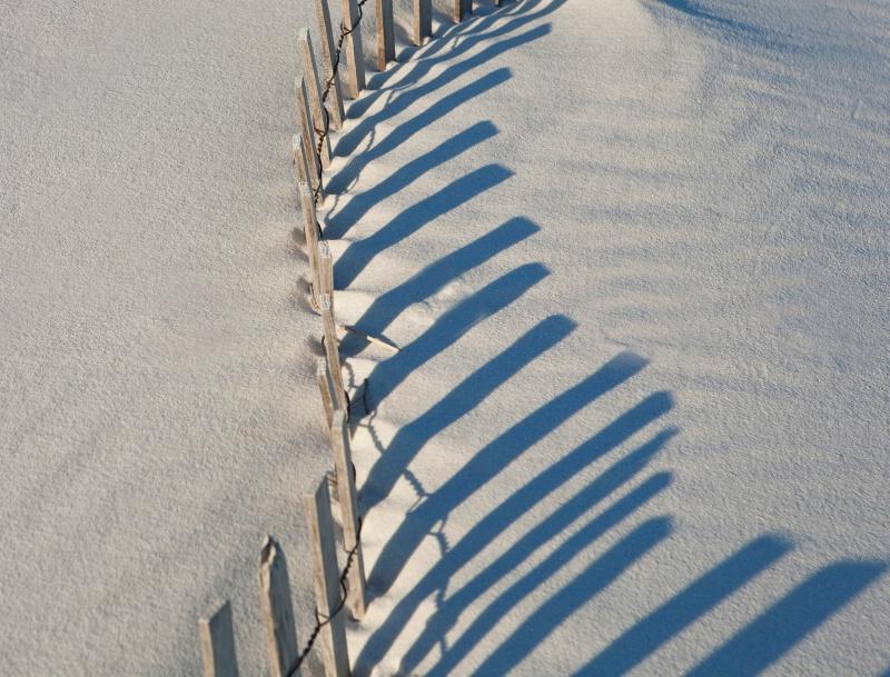 Dune Fence #3