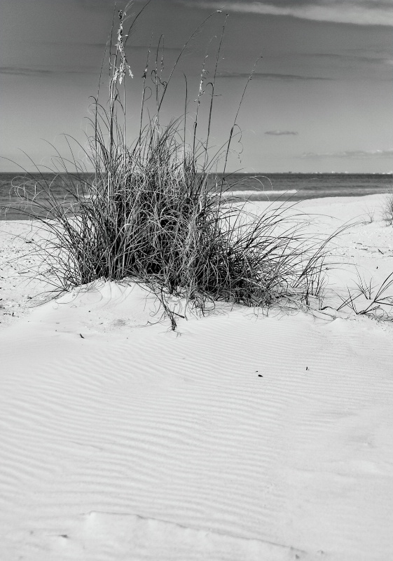 Sea Oats at Barefoot Beach