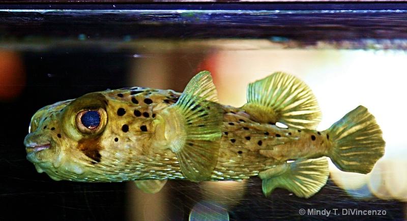 Aquarium Fish (1)