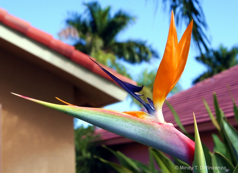 Bird of Paradise and Palms