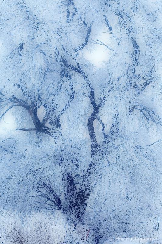 Winter 2009 6130
