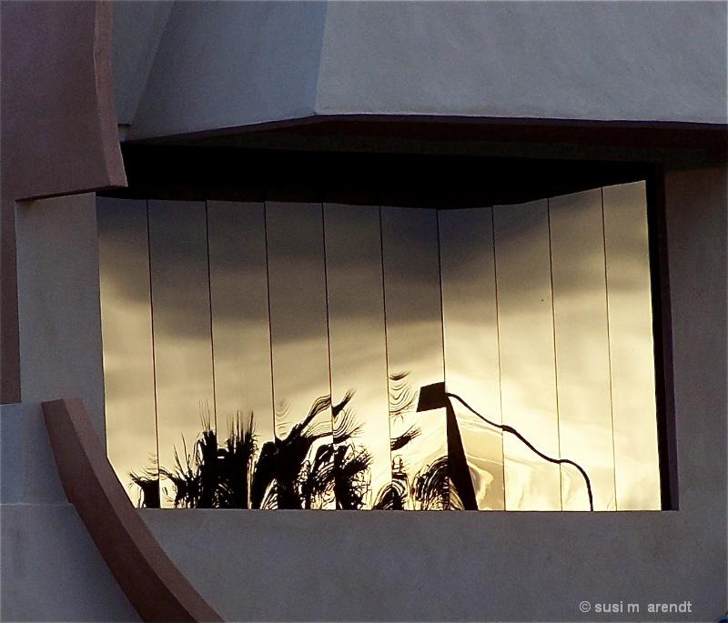Window Palms