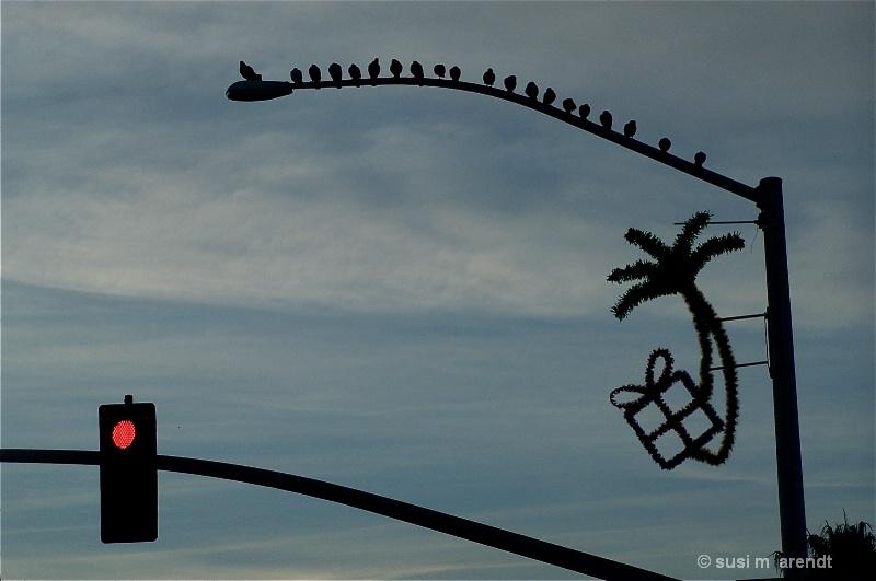 Xmas Deco w/ Crows