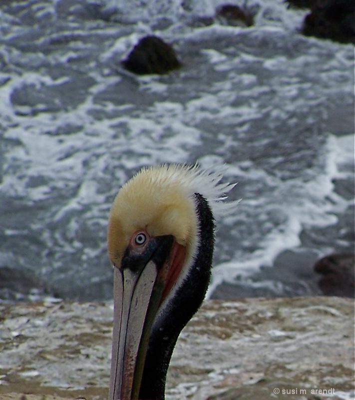Pelican II