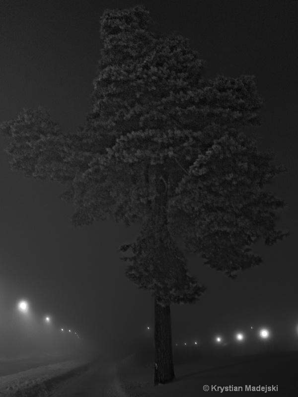 Night frosty tree