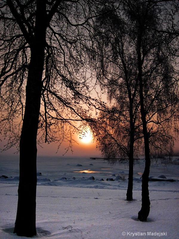 Trees and sunrise seaside