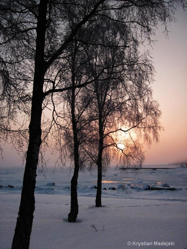 Trees seaside and sunrise