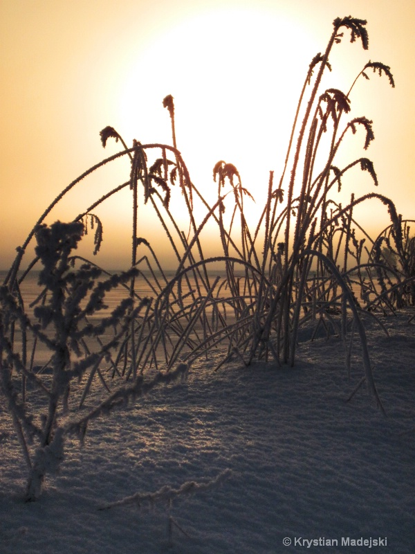 Sunrise and frosty grass