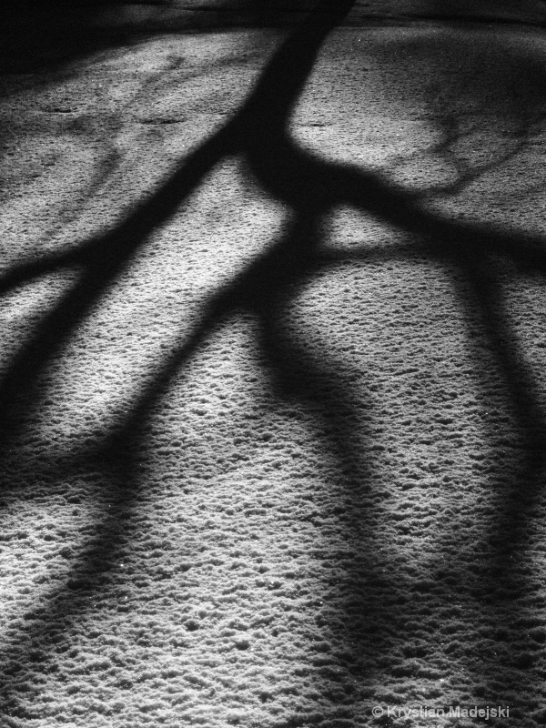 Trees shadow