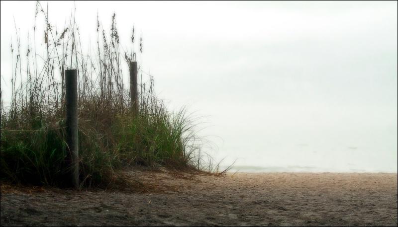 fog on the beach