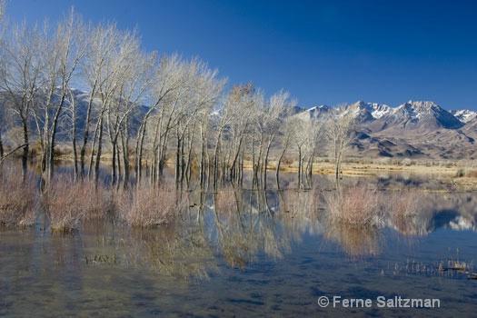 Farmers Pond Winter