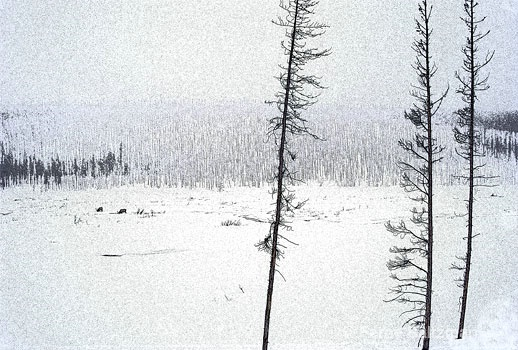 Yellowstone Blizzard