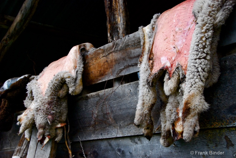 Lamb Skins