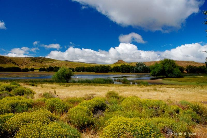 Bosque, Patagonia