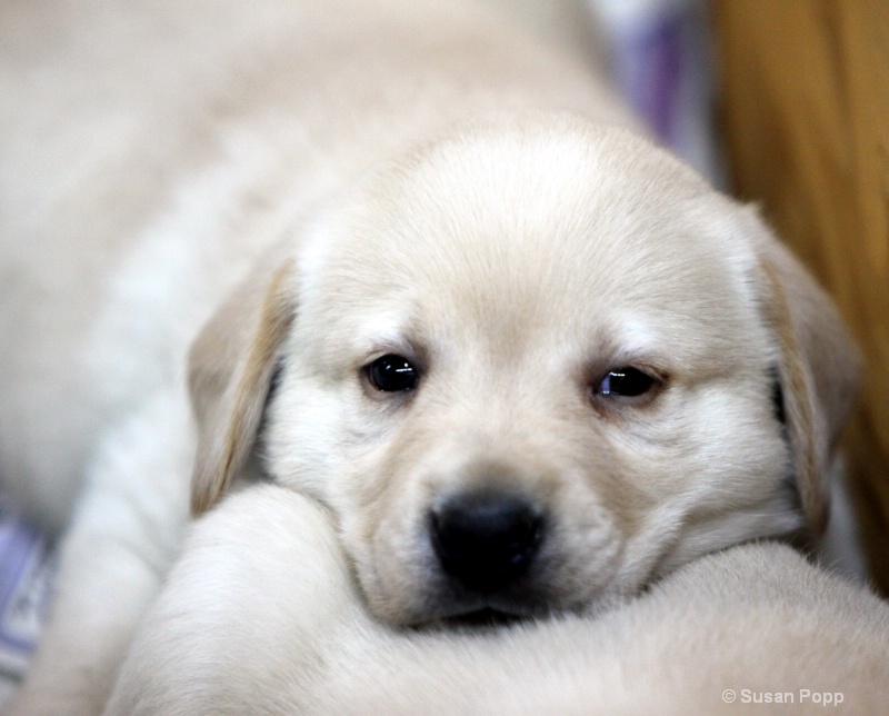 Pillow pal