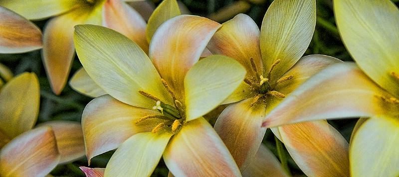 mellow yellow 1