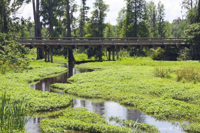 finizey-swamp-web