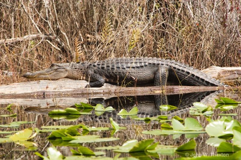 gator 7468web