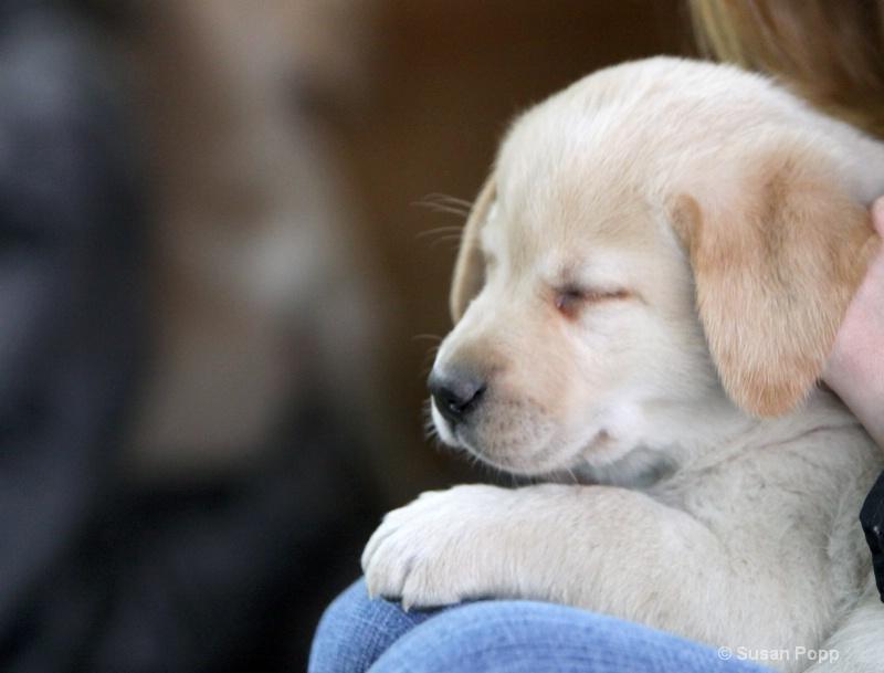 Asleep in her lap