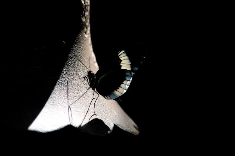 Illuminated Butterfly