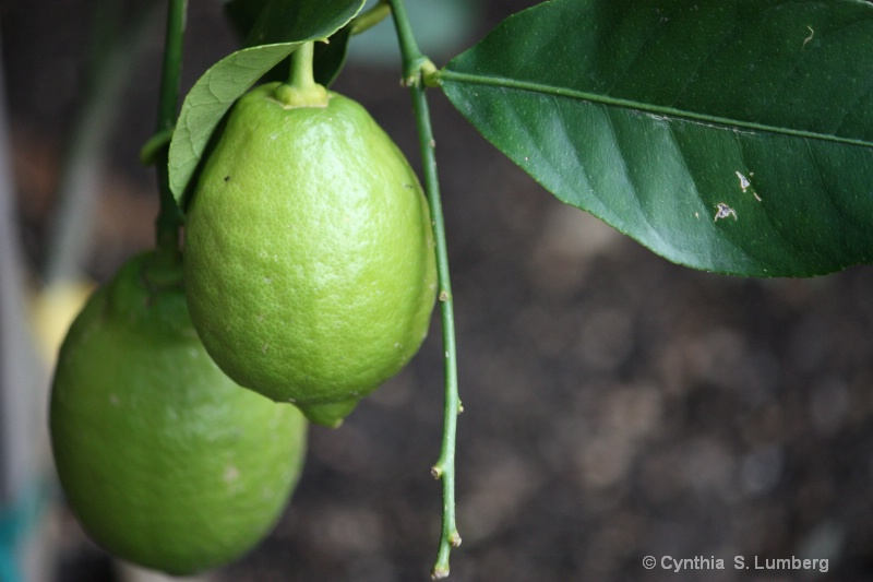 Lucious Lemons