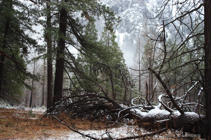 Winter Forest - Yosemite, CA