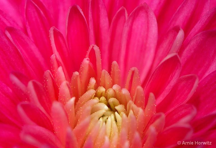 Heart of the Flower