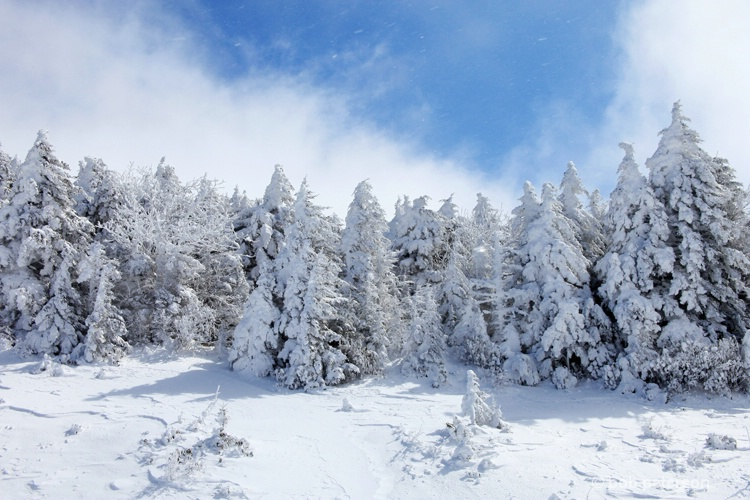 winter beauty on Roan Mnt