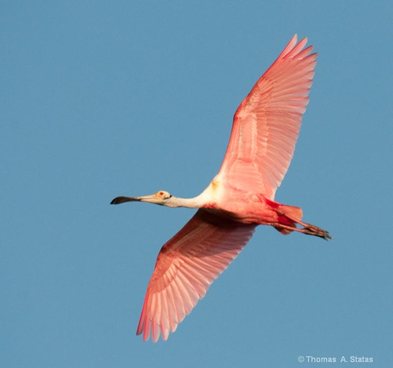 The Birds of Merritt Island