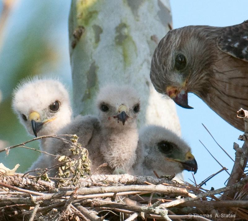Hawks of the Holiday Inn