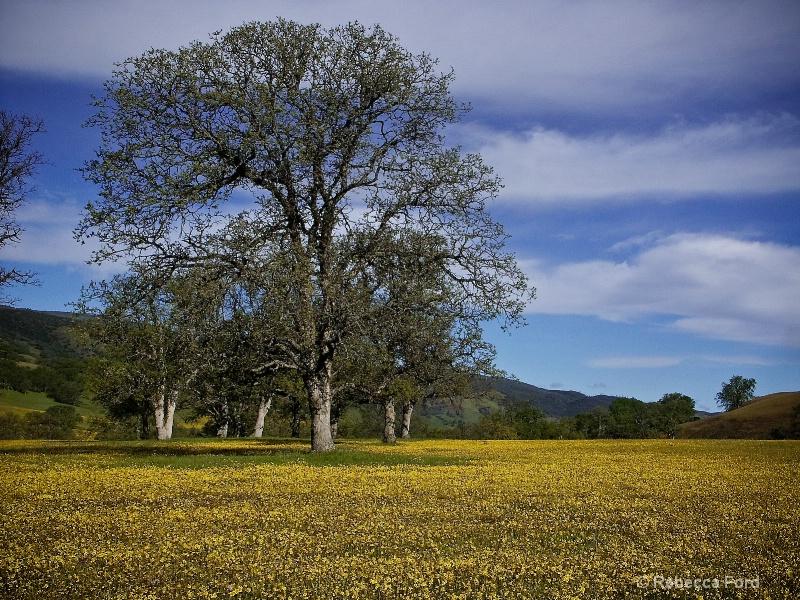 Ca Oaks in Bear Valley