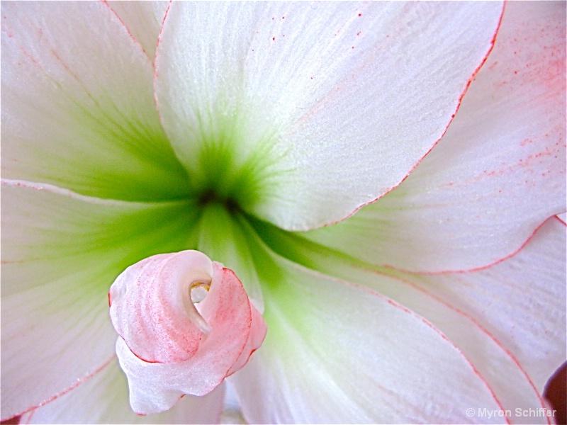 Flora Tenera