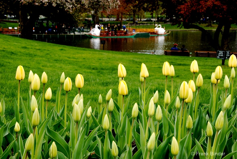 Spring in Boston