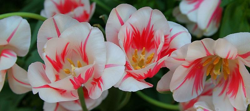 pink & white 7