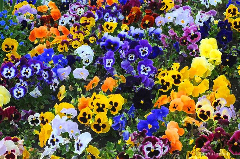 The craze of colours 1