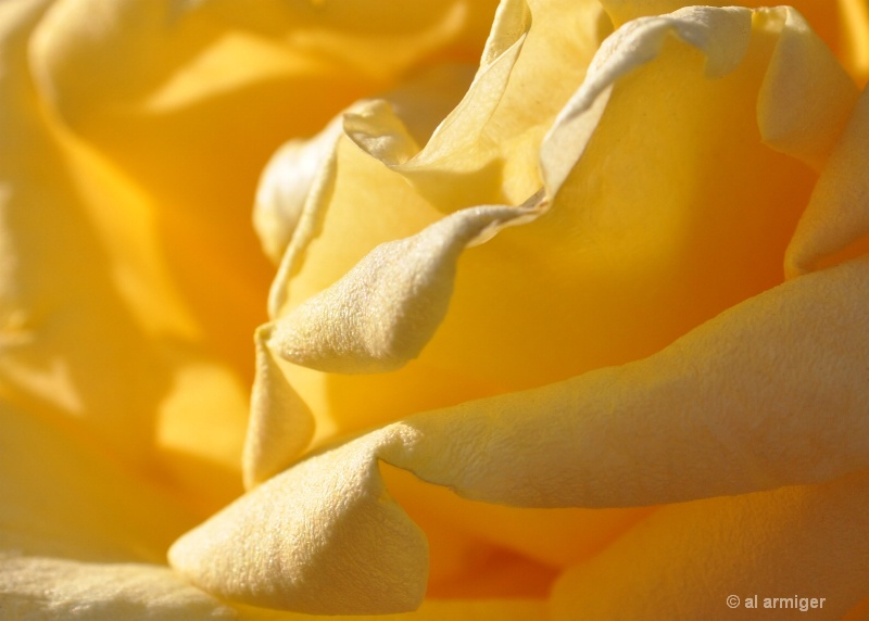 Tounge like petals.