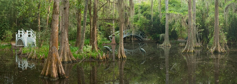 Cypress Swamp Pan 2, Magnolia Gardens