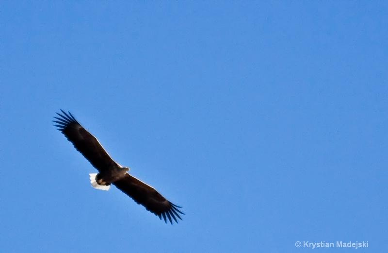 Flying beast