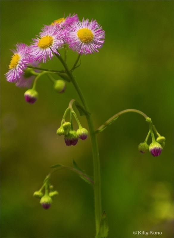 Wildflower at John Heinze Nature Preserve