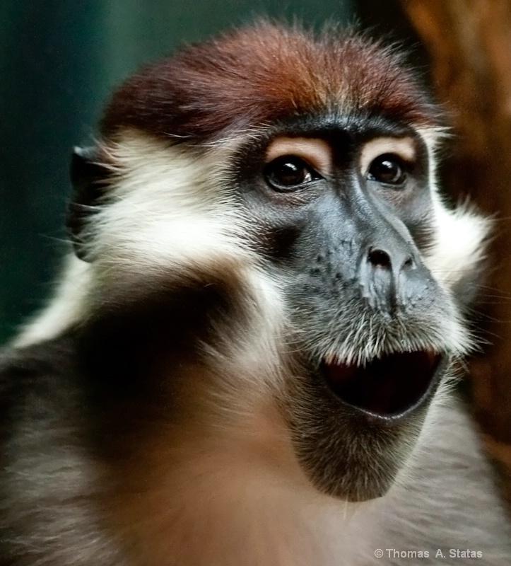 tom statas monkey zoos